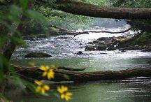 North Carolina Beauty