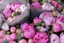 Flowers oohh lala