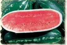 2018 Garden Fruit