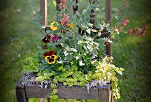 аранжировка цветами