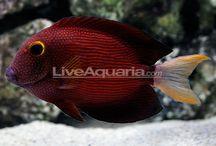 Current Fish Tank / by Ashley Bennett