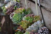 Beautiful succulents / by Paula Rea