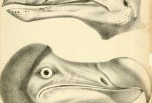 The Book of Lost Birds / In Memoriam