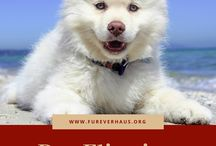 Pets and Pet Care Information