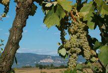 """TENUTA ETRUSCA / V srdci údolí Valdichiana, nedaleko etruského města Cortona a Trasimenského jezera leží tato přenádherná agroturistická farma """"Tenuta Etrusca"""".  Je obklopena nádhernou zahradou plnou cyprišů, olivovníků, polem zlatých slunečnic a nekonečných vinic. VÍCE INFORMACÍ: http://www.prima1vera.com/nabidka-ubytovani/agroturismy/tenuta-etrusca/"""