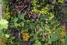Vertical Gardens / Vertical Gardens and Urban Jungle and others that are interesting.
