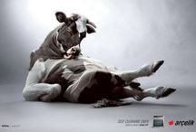 ADS   Direction   Animals / by Ahmed Espania