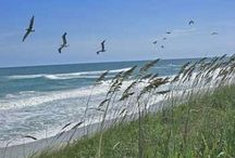 Onslow County / They beauty of Onslow county