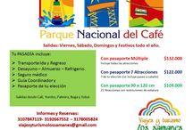 Viaja por el Eje Cafetero / Viaja por el paisaje cafetero más hermoso del planeta. Salento, Quimbaya, Filandia, Santa Rosa de Cabal, etc.