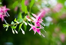 Flowers in Nature / Trees, plants and flowers photographed in nature.