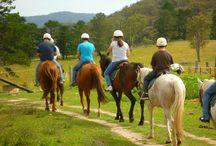 horse riding Kephalonia