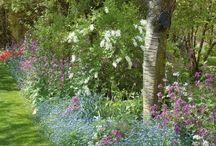 Jardin ombrage