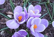 Spring / by Laura Bankert