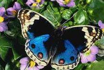 Butterfly / Animali