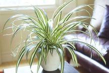 plantes et intérieur