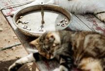 Cats / by Astrid Telander