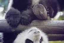 пандюшки