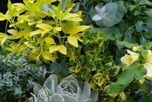 Interesting plant combos