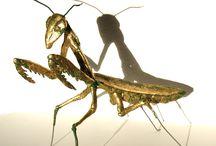 Käfer und anderes Krabbelgetier