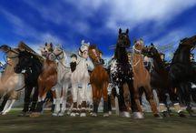 Different Ponies / Najlepszy klub na SSO