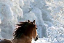 Atlar.