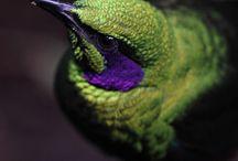 Os mais belos animais / by Beth Guimarães