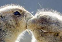 csókolózó állatkák
