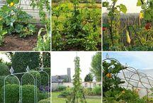 Växtstöd, portaler och skärmar