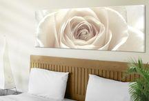 Rosen | Roses / Das wohl bekannteste Geschenk, wenn es um die Liebe geht: Die Rose. Sie ist zart und doch so stark mit ihren Dornen. Verlieb dich neu in unsere Rosen auf Bilderwelten.de #Rose #Rosen #Rosengarten #Blumen #Dornen #Liebe