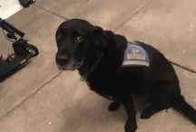 Assistance Dogs DHH #cuteness