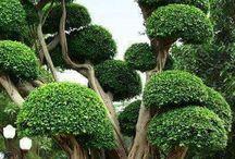 trees°