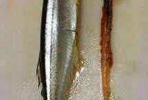 魚のおろし方