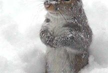 SQUIRREL! / by Clark Griswold