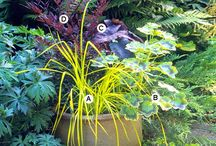 containers-plants combinations