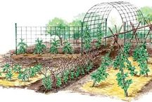 Outdoor Gardening and Projects / by Elizabeth Parsons