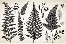Графика. Растения