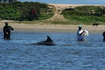 Dolphins are Best Friend / Fishermen in the Brazilian city of Laguna have a symbiotic relationship with dolphins. For over a century these dolphins are helping them to catch fish.