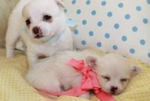 My baby puppies