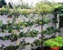 Discovery Garden Ideas