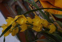 Flowers of Bhutan / http://krishnandusarkar.com