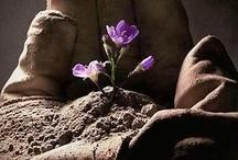Фиолетовые цветы - ирисы, фиалки, лаванда, глициния