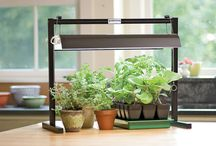 Gardening in Small Spaces / San Francisco's tight spaces doesn't mean you have to give up on gardening. Great urban/ small space gardening ideas here.