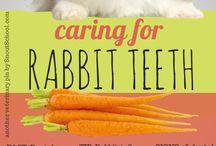 Bunny Care