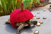 Tortoises in sweaters / Żółwie w sweterkach.