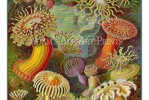 plantas y ambientes