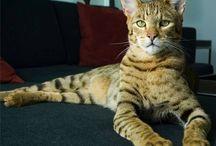 ☕  A világ legdrágább cicája  ☕