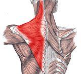 Trapecio hombros y lumbares