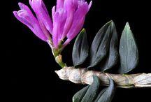 Flowers / by Beth Skipper