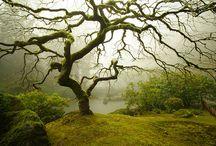 Tree Hugger / by Jill Young