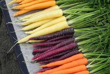 Frutas, legumes, tubérculos etc